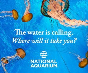 image of commercial advertising for the national aquarium